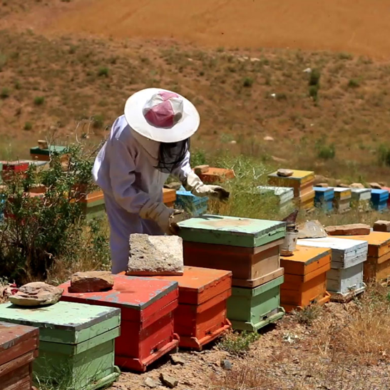 The-Beekeeper-e1533868471135.png